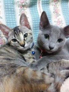 すずこお姉ちゃんと仔猫ももこ