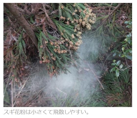 20190406スギ花粉