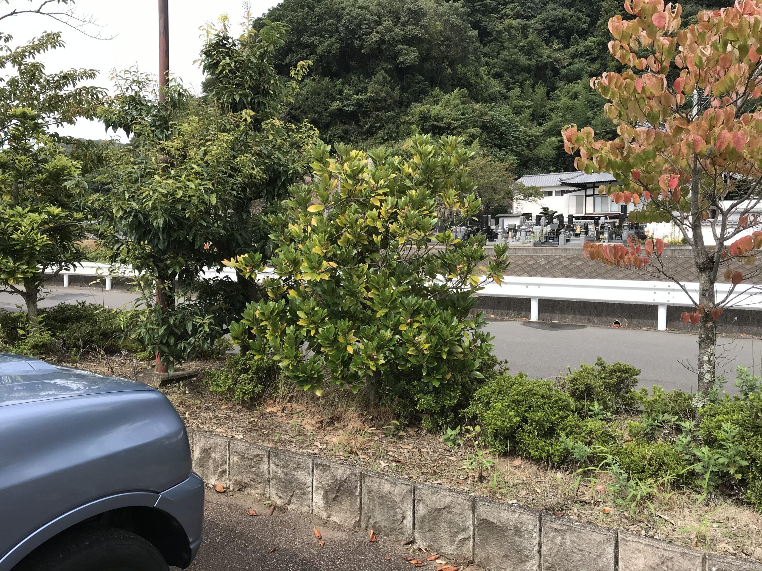 20201002どんぐりの木