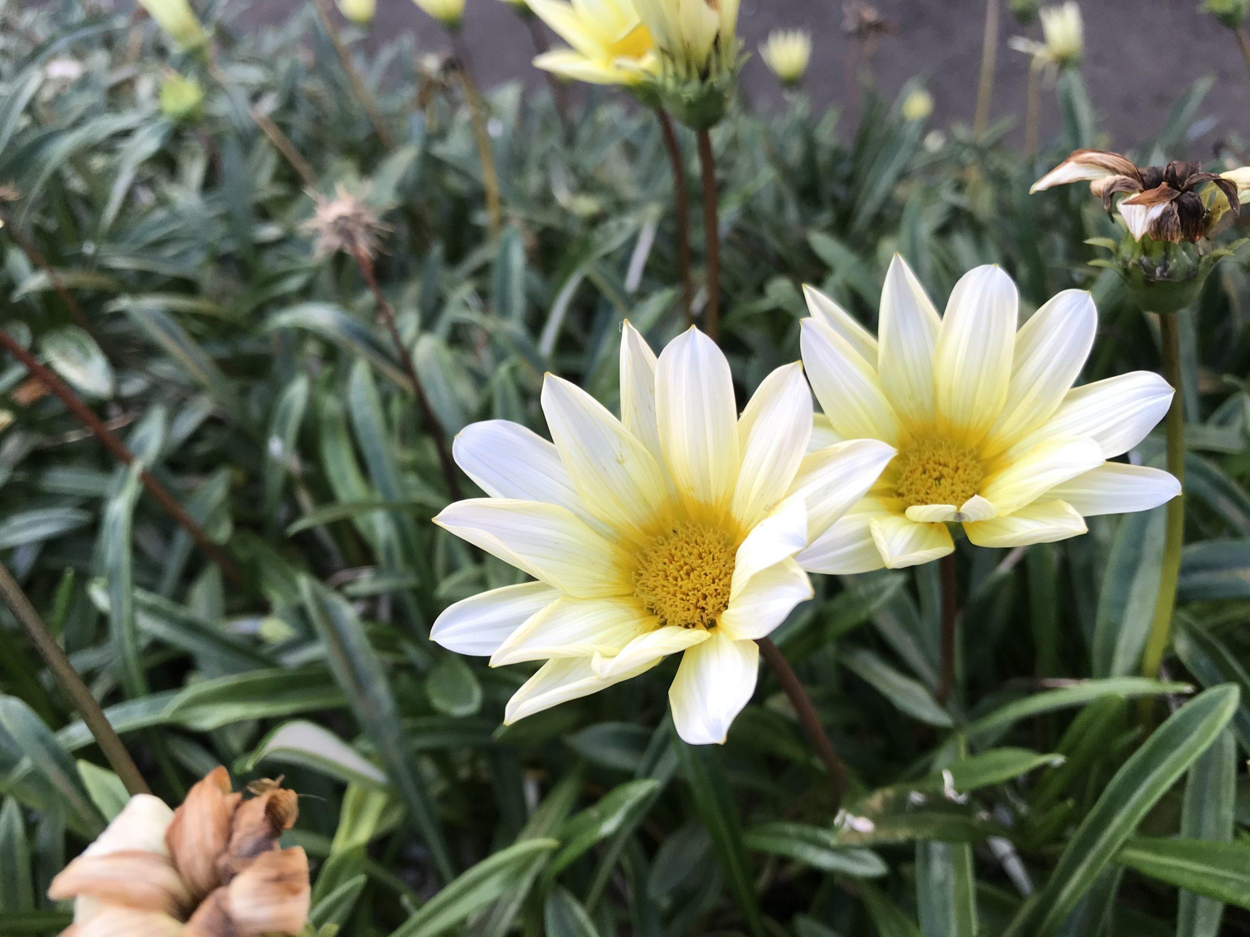 20201123花