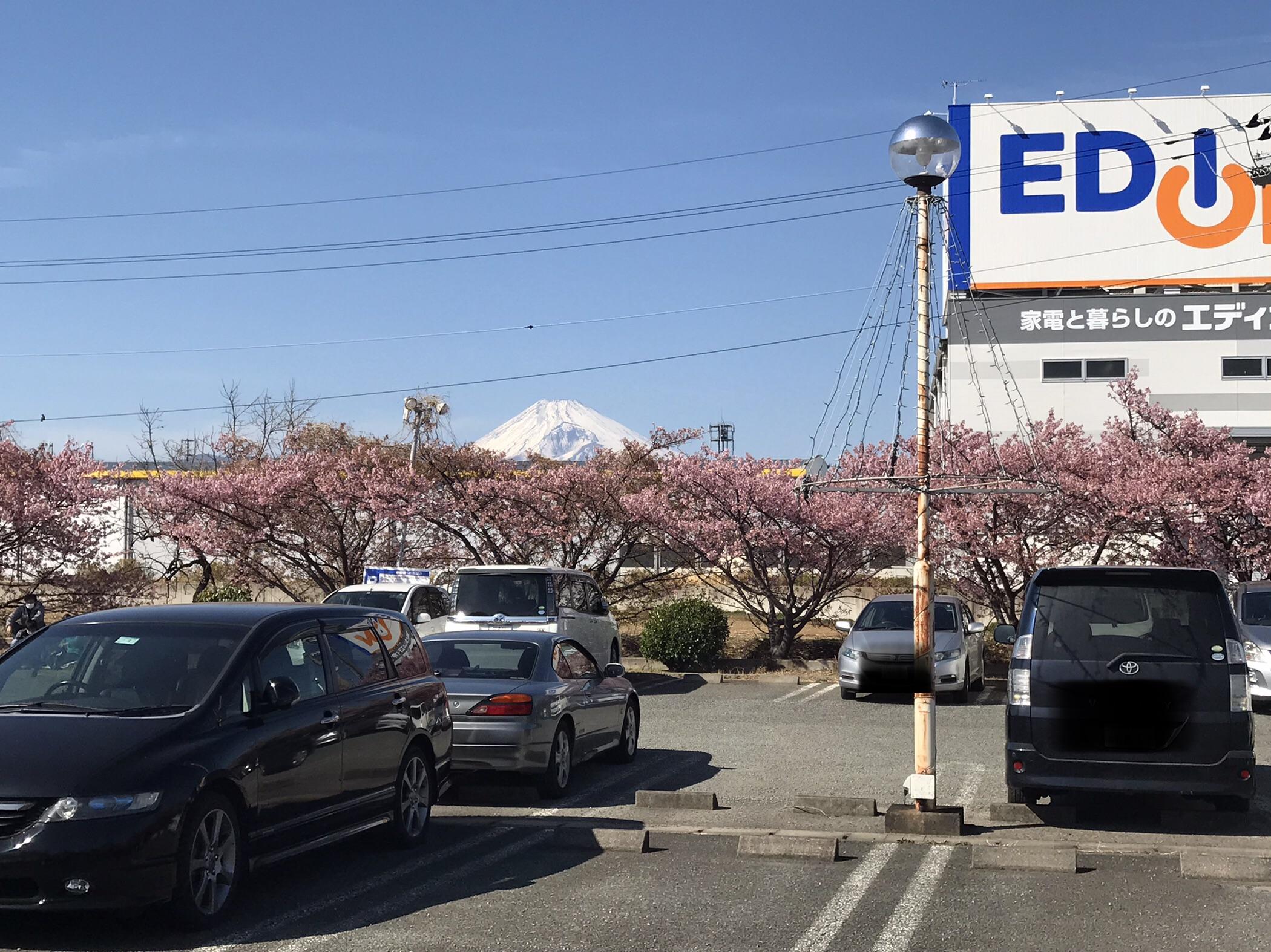 20210228桜1