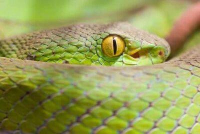 20210404蛇1